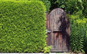 Живая изгородь: что это, плюсы, минусы, из чего сделать, фото